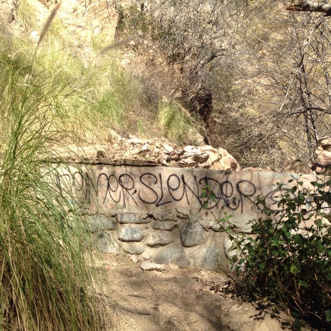 mountain outdoors growth living life nature graffiti publicart streetart treeshellip