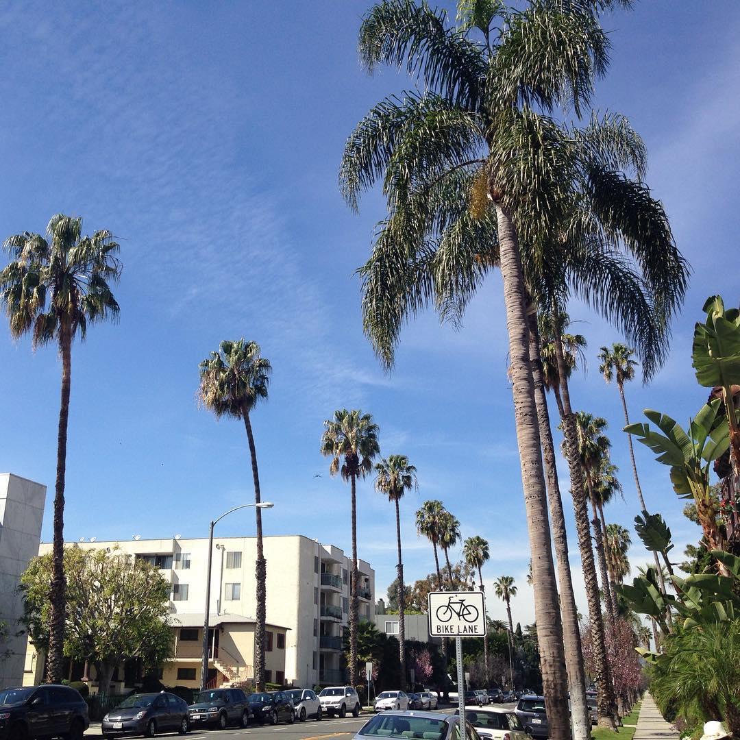 bluesky santamonica california palmtrees buildings architecture architecturelovers design pattern shapehellip